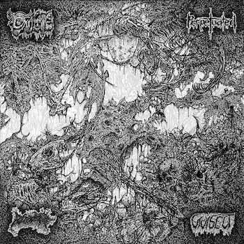 Oxalate / Perpetuated / Blood Spore / Vivisect