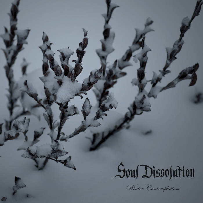 Winter Contemplations